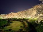 秋田県角館 桧木内川の桜並木の夜景