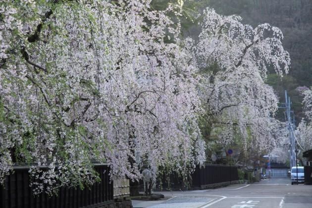 秋田県角館 武家屋敷の枝垂桜